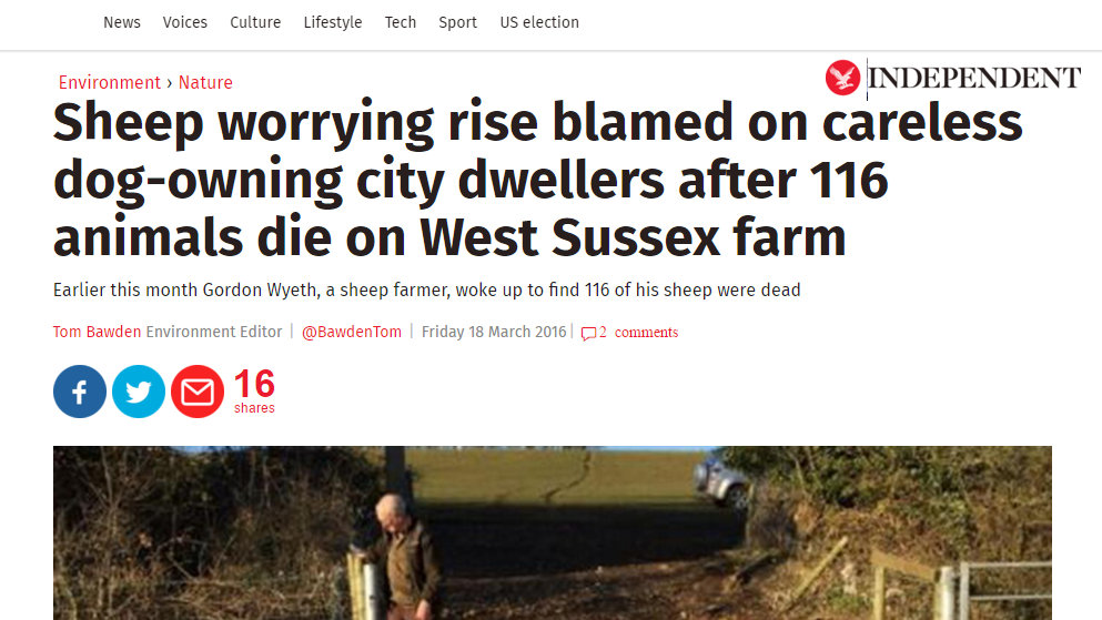 Sheep worrying rise blamed on careless dog-owning city dwellers after 116 animals die on West Sussex farm