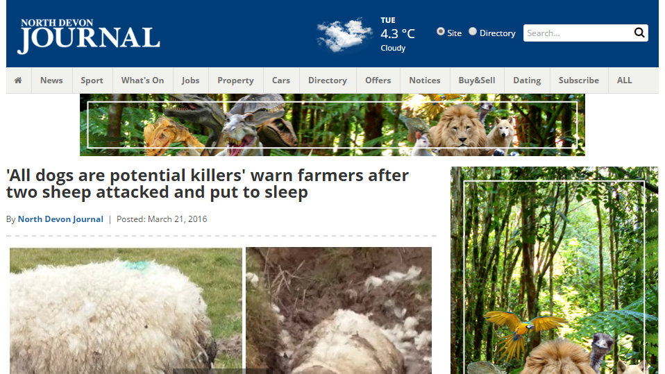 'All dogs are potential killers' warn farmers after two sheep attacked and put to sleep