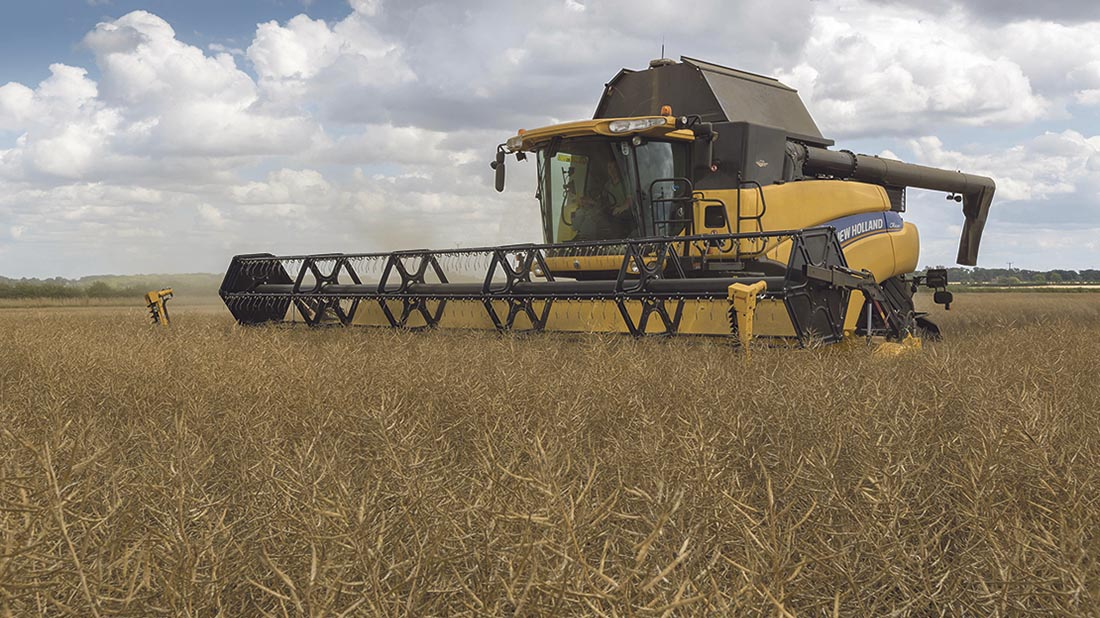 OSR prices predicted to rise after winter plantings decline