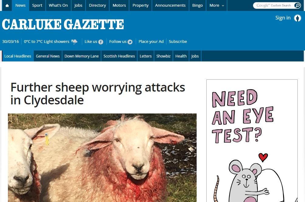 Further sheep worrying attacks in Clydesdale