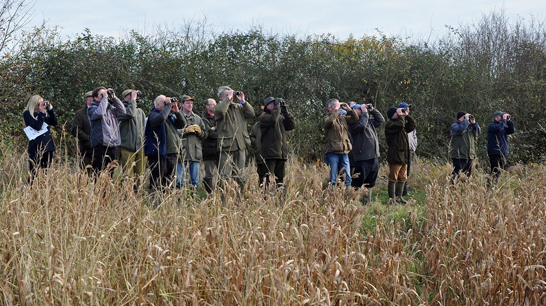 Big Farmland Bird Count 2016 sees record number of species spotted