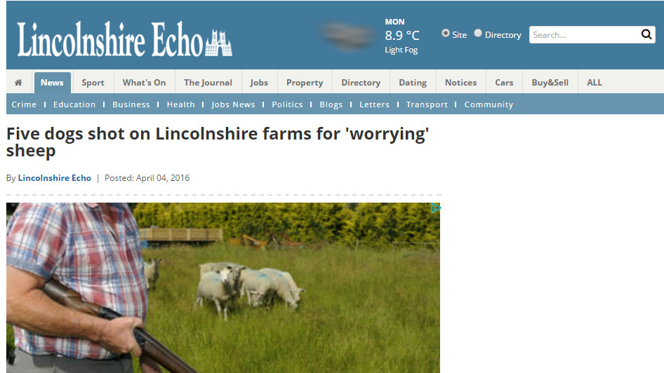 Five dogs shot on Lincolnshire farms for 'worrying' sheep