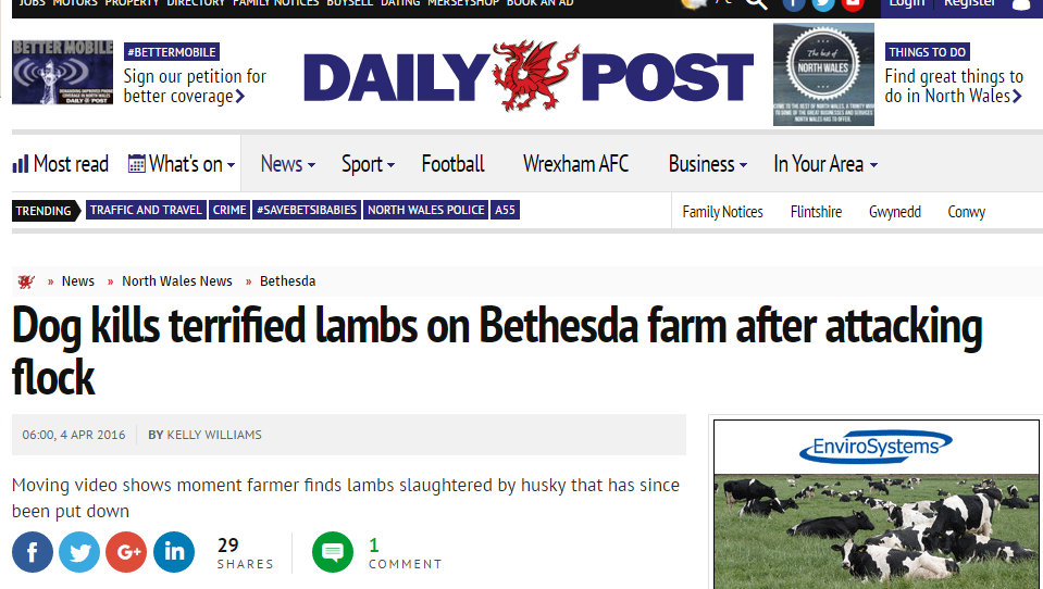 Dog kills terrified lambs on Bethesda farm after attacking flock
