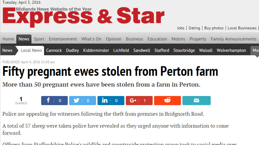 Fifty pregnant ewes stolen from Perton farm