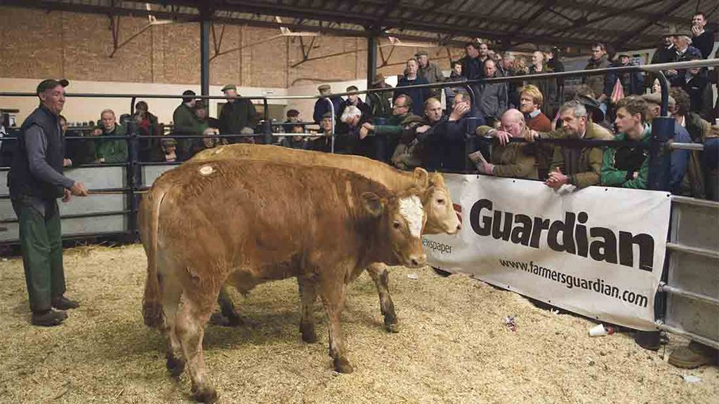 Big entry for Marts The Heart store cattle sale at Melton Mowbray