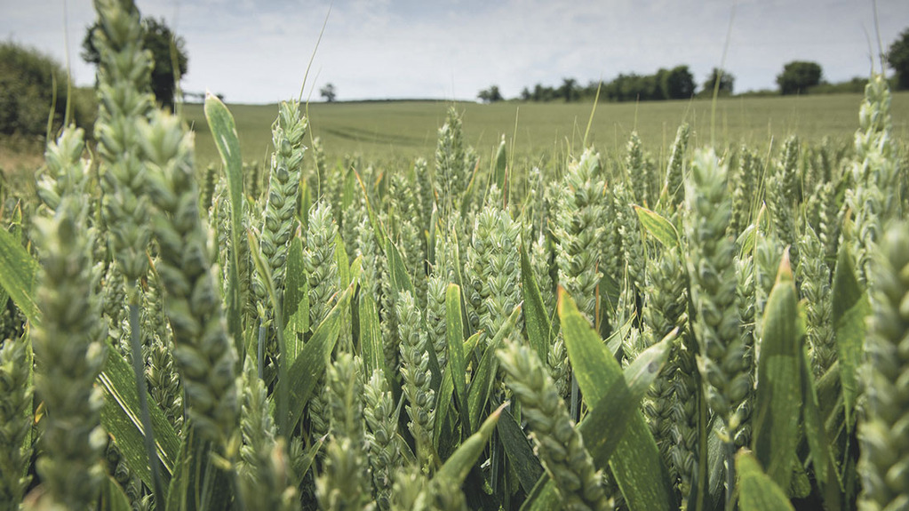 Which English regions grow the most profitable winter wheat crops?