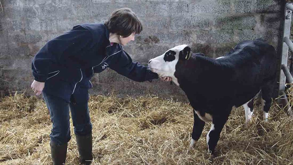 Alison looks after the calf rearing unit, as well as managing the business' paperwork