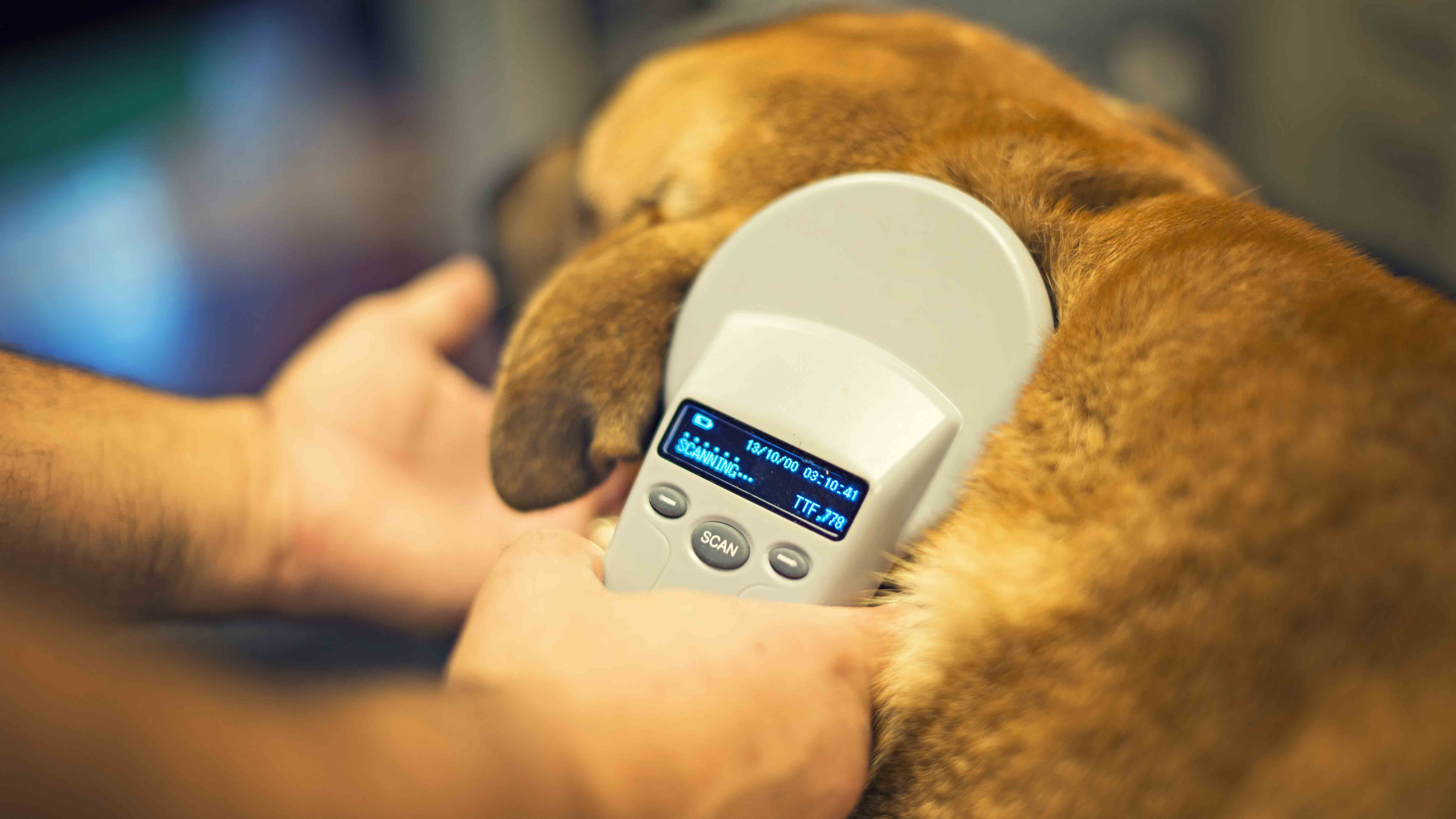 Owners reminded working dogs are not exempt from compulsory microchipping rules