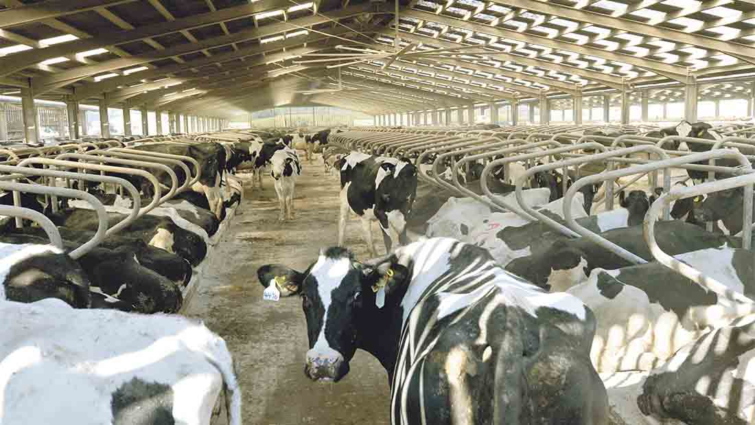 Countryfile feature reignites debate on indoor dairy housing