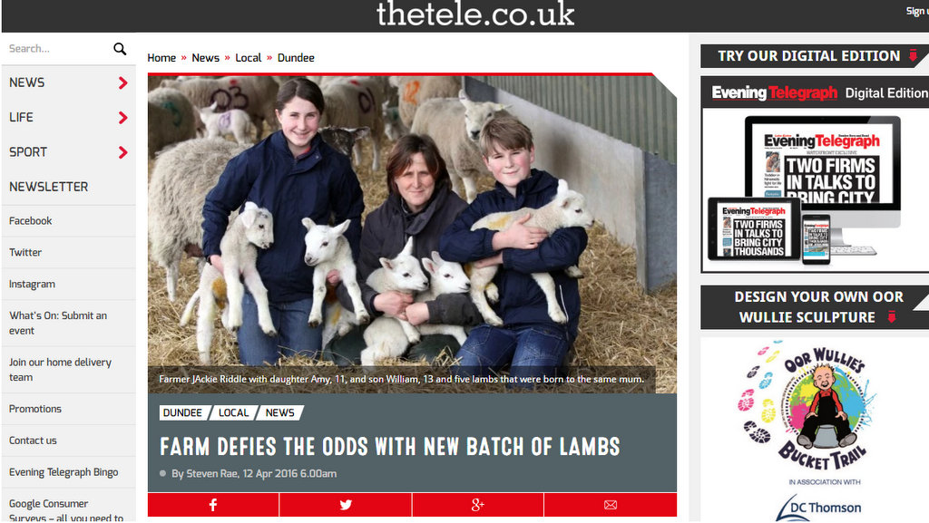 Farm defies the odds with new batch of lambs