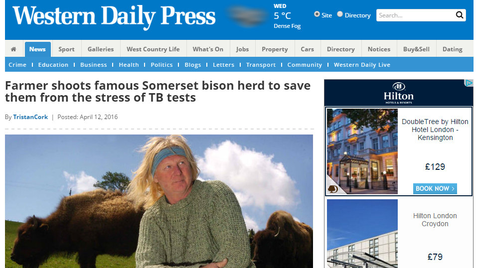 Farmer shoots famous Somerset bison herd to save them from the stress of TB tests
