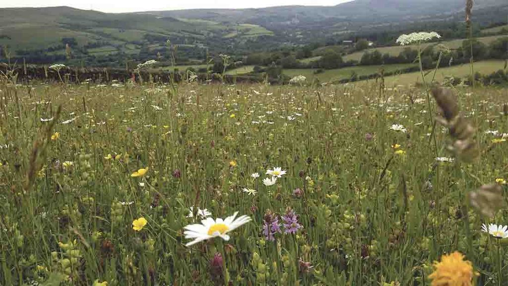 Future funding for Countryside Stewardship is not yet confirmed