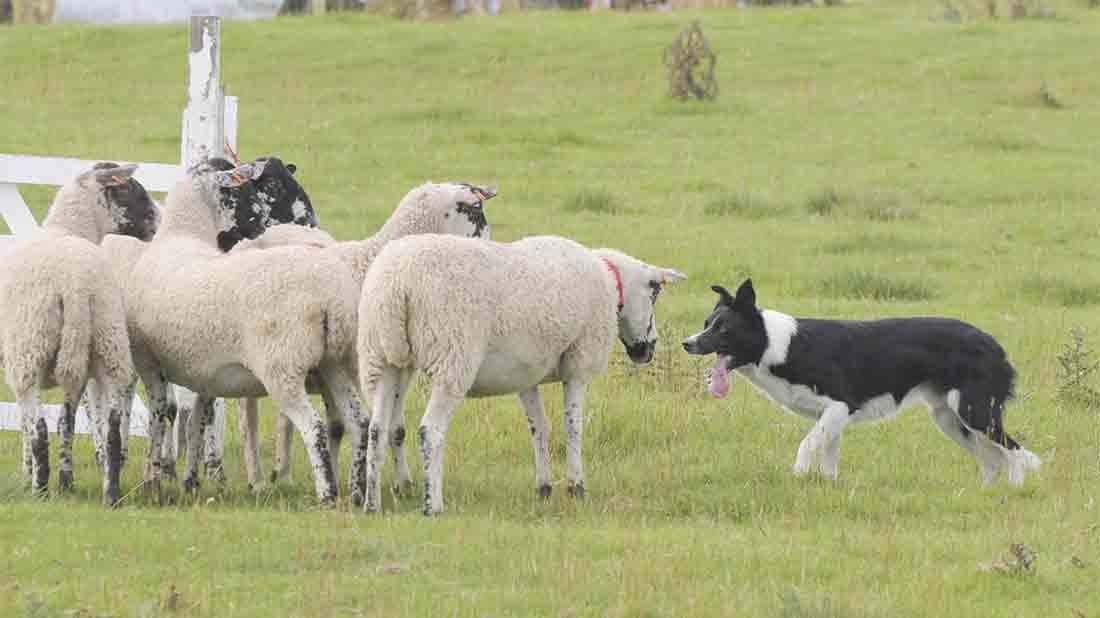 Farmers Guardian caption competition No. 6 - Winners!