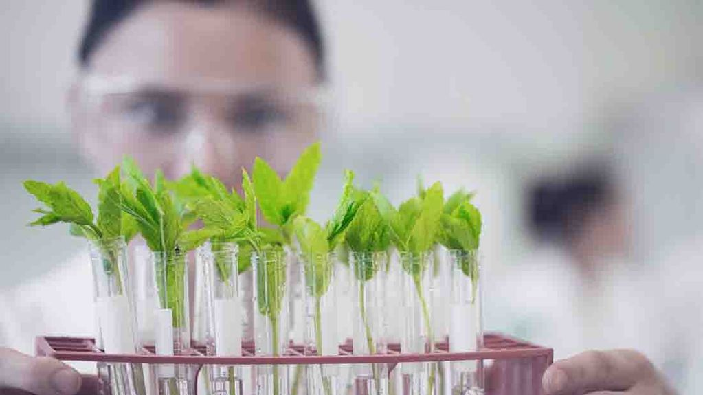 Why politics must not be allowed to scupper 'explosion in plant breeding science' - Bayer