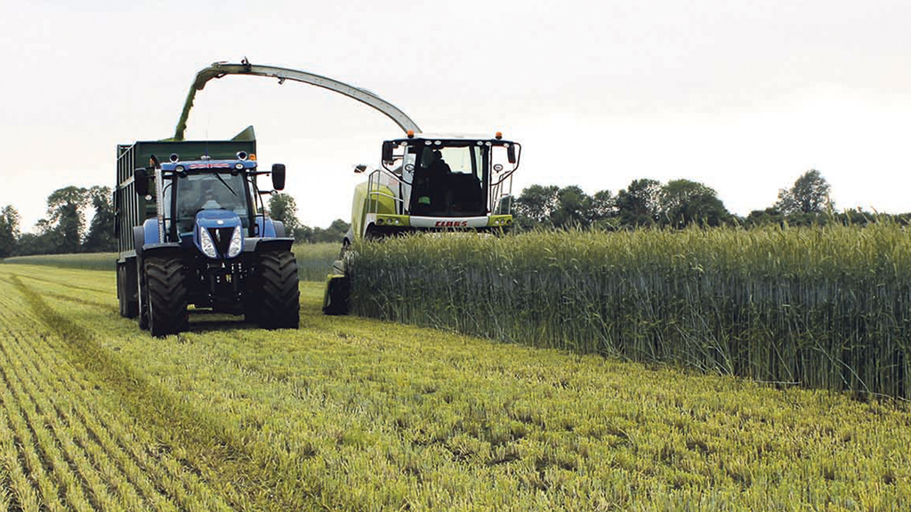 Energy crops offer valuable benefits to rotation and margins
