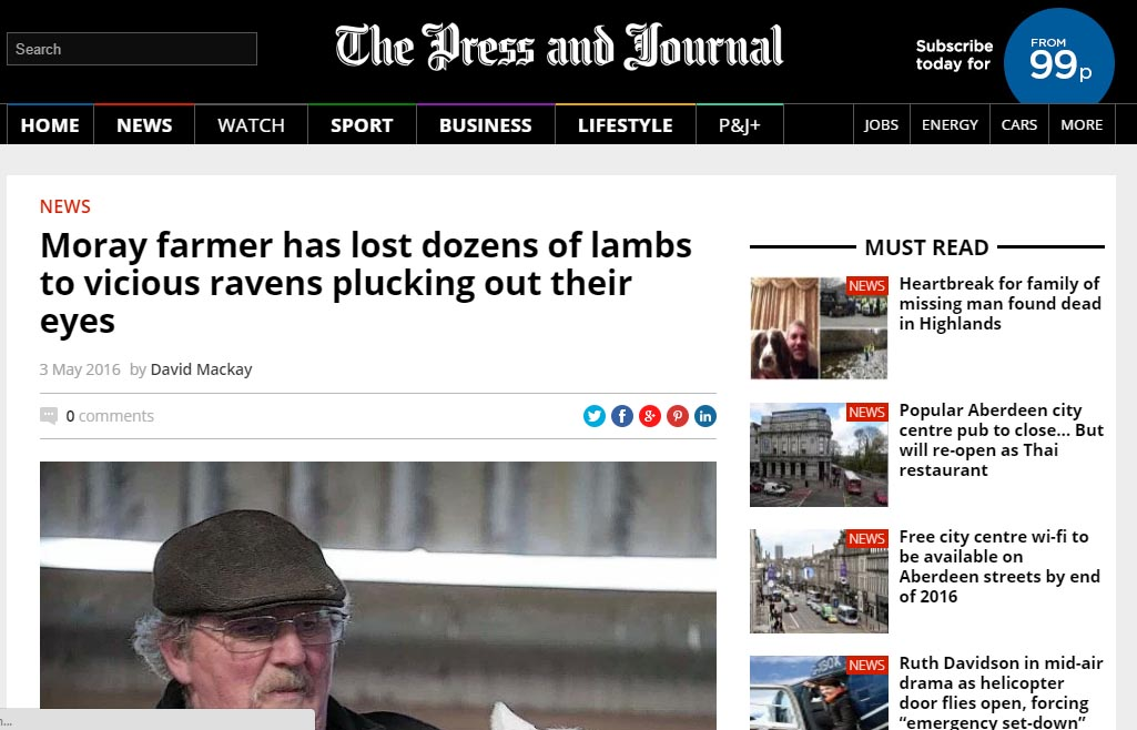 Moray farmer has lost dozens of lambs to vicious ravens plucking out their eyes