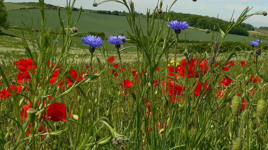 Making the most of Countryside Stewardship schemes