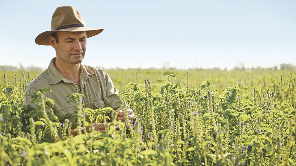 Australian farmer rediscovers ancient grain and pioneers new market