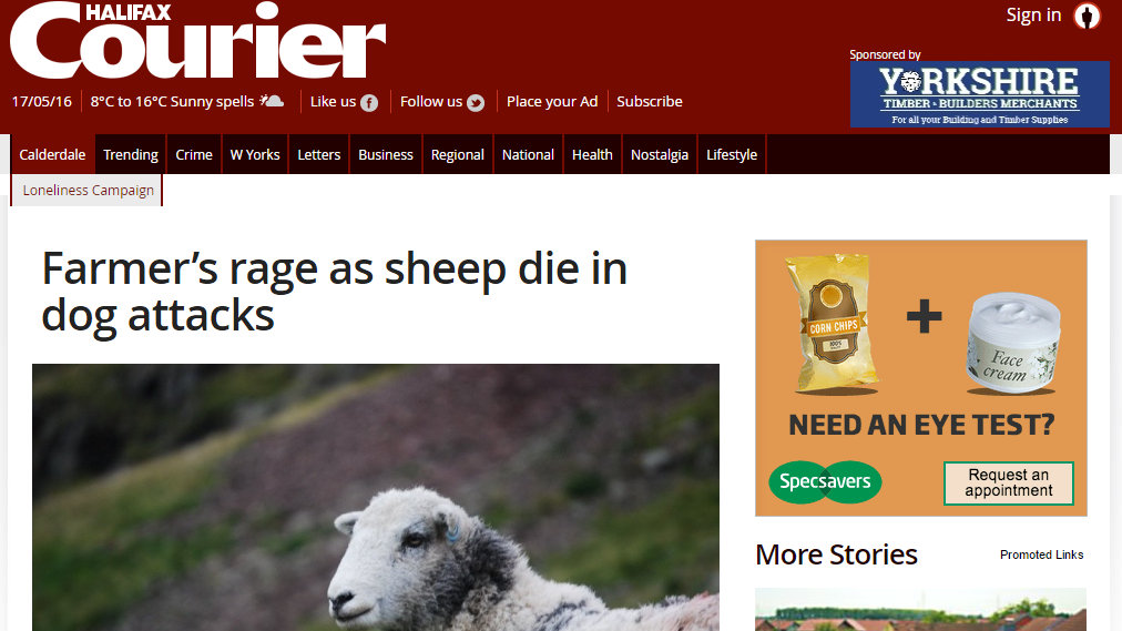 Farmer's rage as sheep die in dog attacks