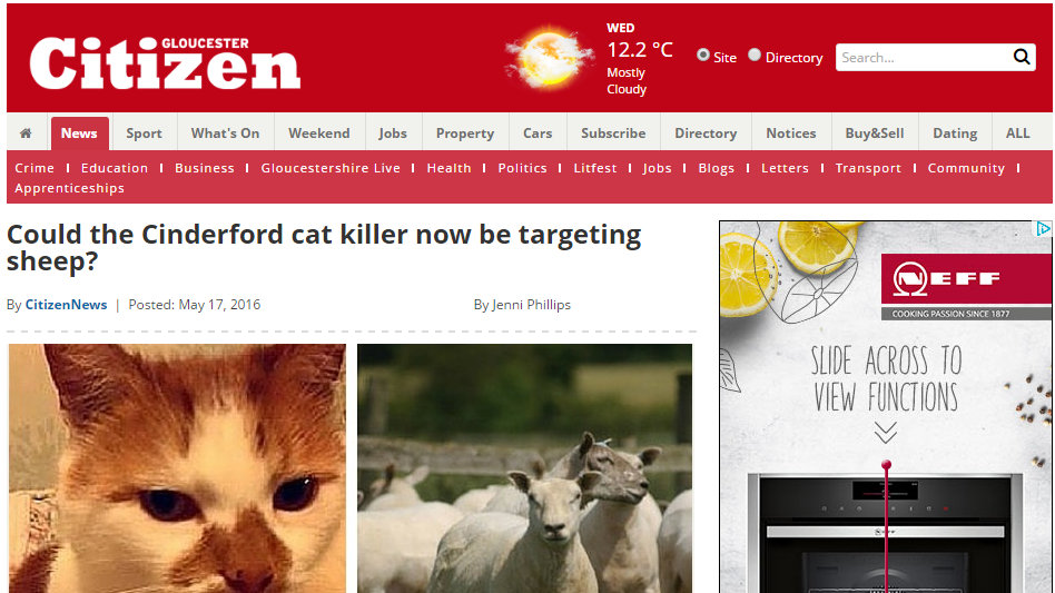 Could the Cinderford cat killer now be targeting sheep?