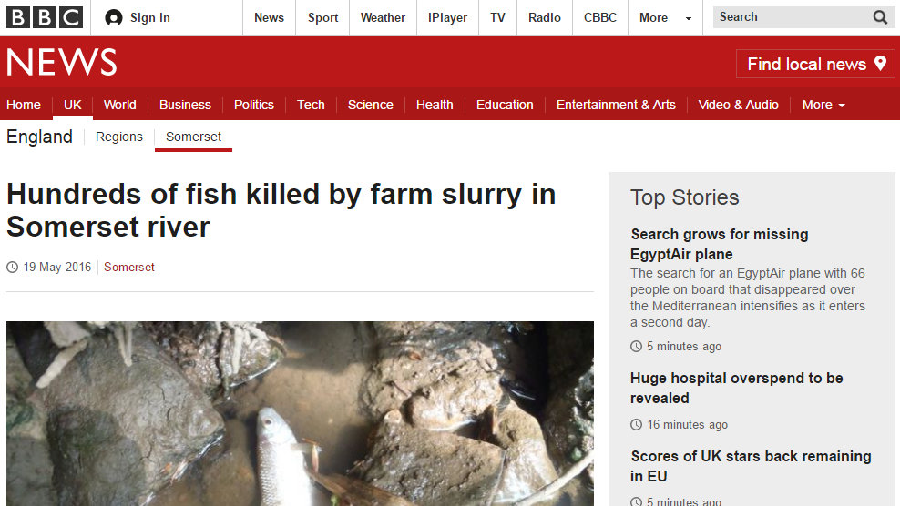 Hundreds of fish killed by farm slurry in Somerset river