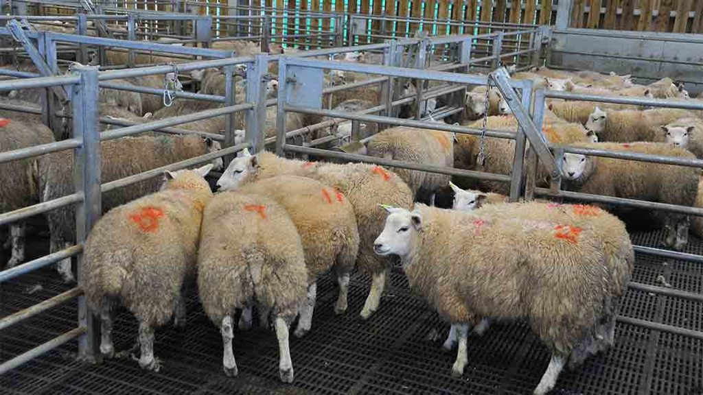 Mandatory method of production labelling would be 'misleading', says NFU