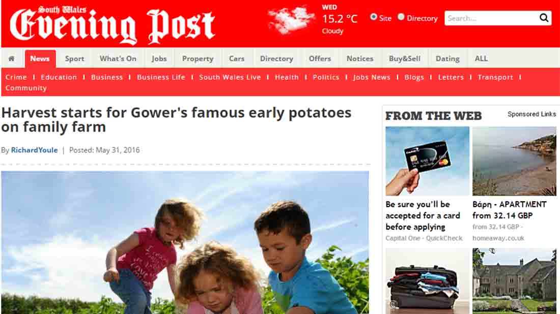 Harvest starts for Gower's famous early potatoes on family farm