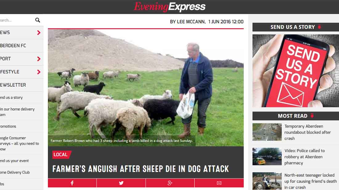 Farmer's anguish after sheep die in dog attacks