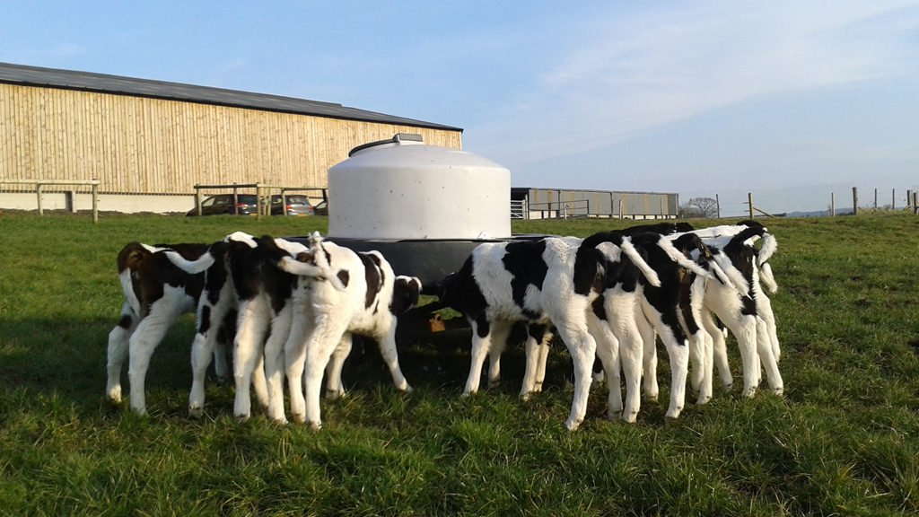Blog: Milking 550 cows in two and a half hours - experiencing an organic dairy farm
