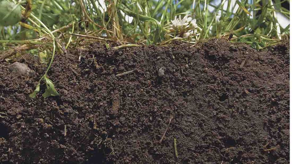Soil health under parliamentary spotlight for the first time