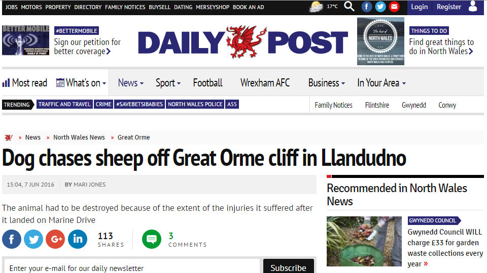 Dog chases sheep off Great Orme cliff in Llandudno
