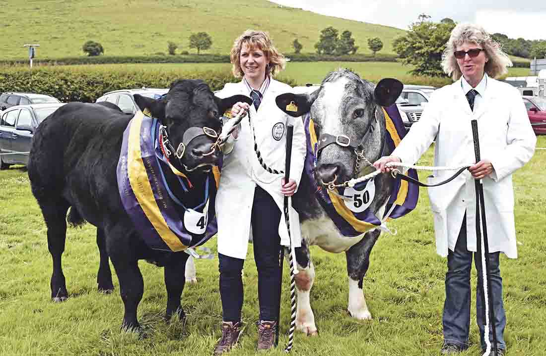 British Blue's lead the way at Aberystwyth and Ceredigion Show