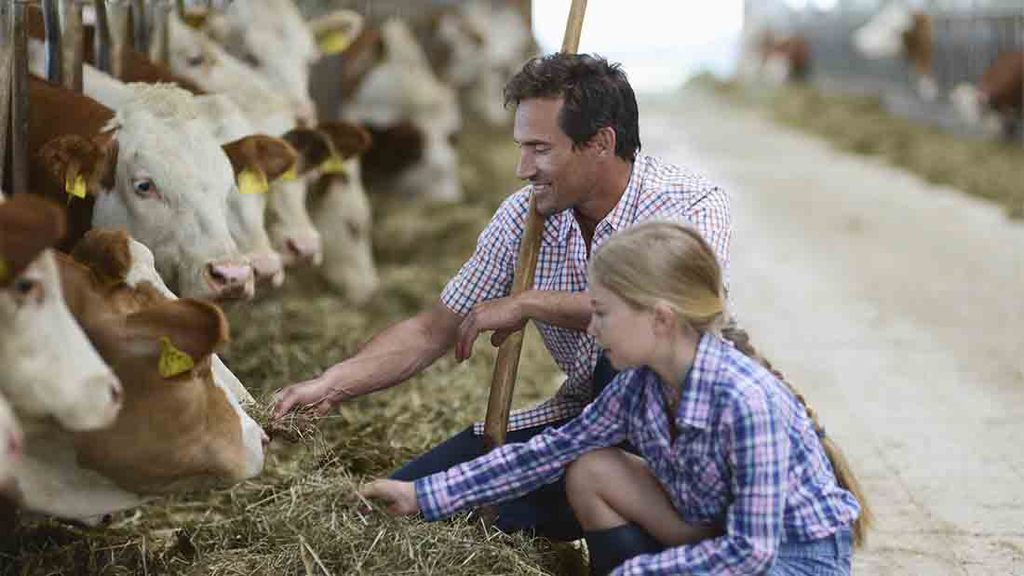 Call for action as family farms suffer 50 per cent decline