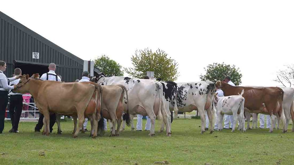 From the editor: Are agricultural shows a 'shop window' for animals?