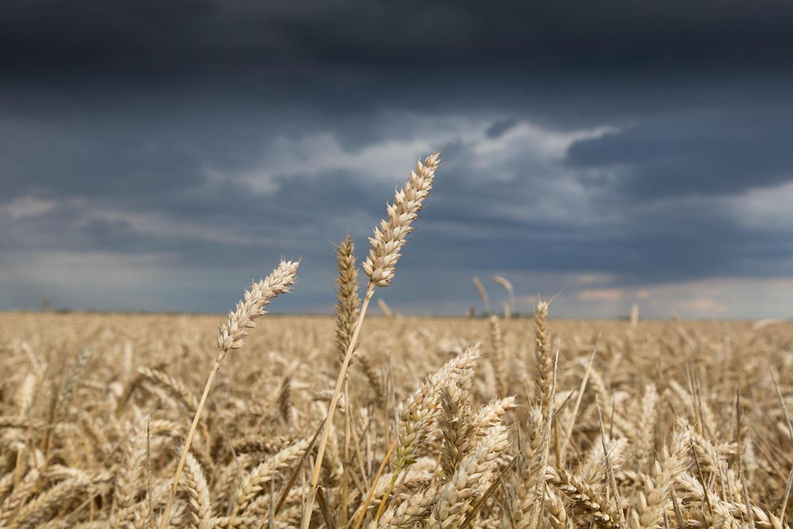 Make hay when the sun shines - experts warn of frustrating weather ahead