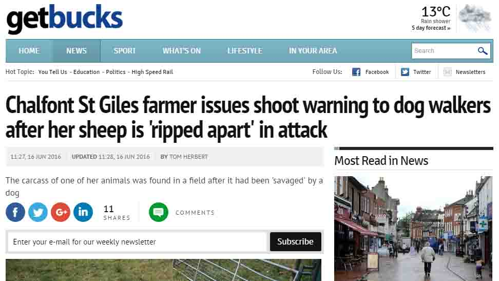 Farmer issues shoot warning to dog walkers after her sheep is 'ripped apart' in attack