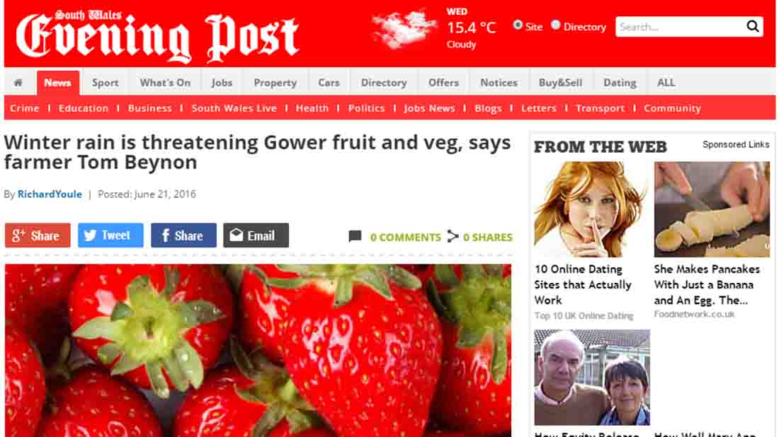 Winter rain is threatening Gower fruit and veg, says farmer Tom Beynon