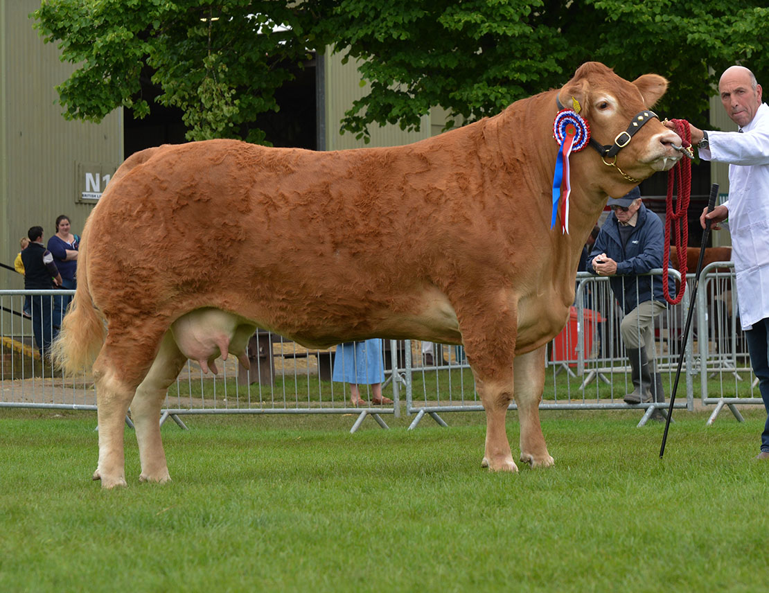 Third Malvern interbreed win for Herefordshire Limousin herd at Royal Three Counties Show