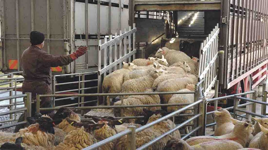 Simplified livestock movement rules come into force
