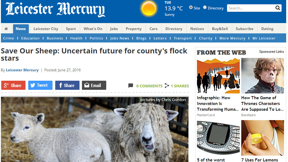 Save Our Sheep: Uncertain future for county's flock stars