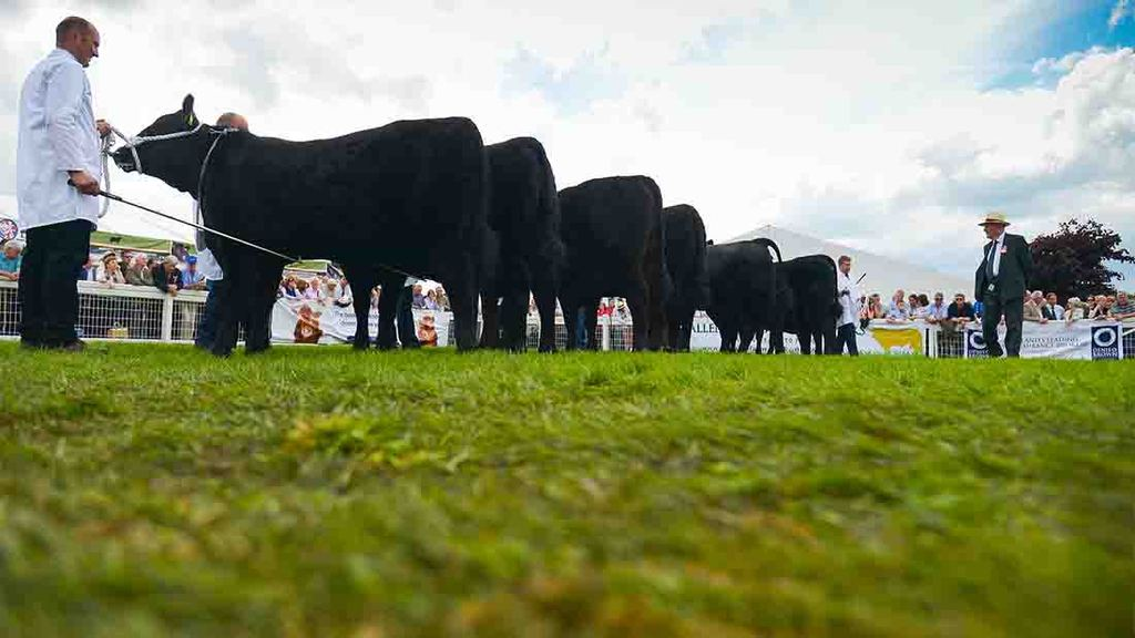 Hereford bull from Leicestershire wins beef judging at Royal Highland Show