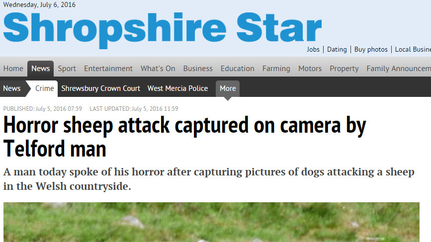 Horror sheep attack captured on camera by Telford man