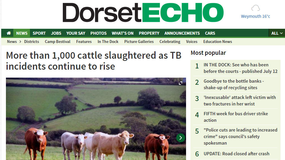 More than 1,000 cattle slaughtered as TB incidents continue to rise