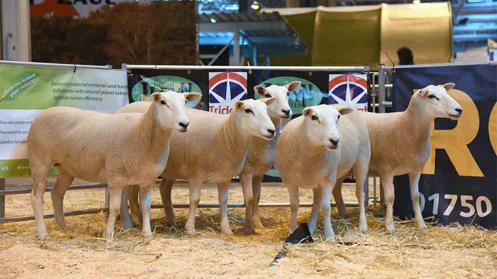 Northern Ireland livestock sectors must be supported by EU aid package, say UFU