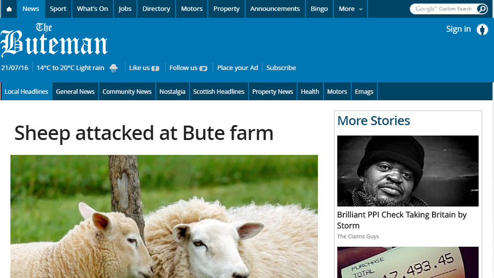 Sheep attacked at Bute farm