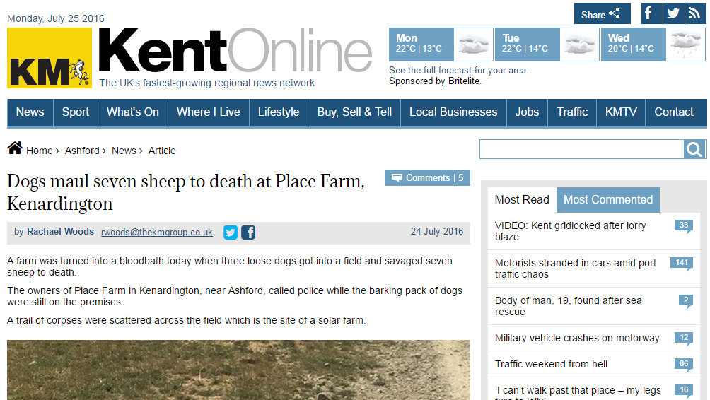 Dogs maul seven sheep to death at Place Farm, Kenardington