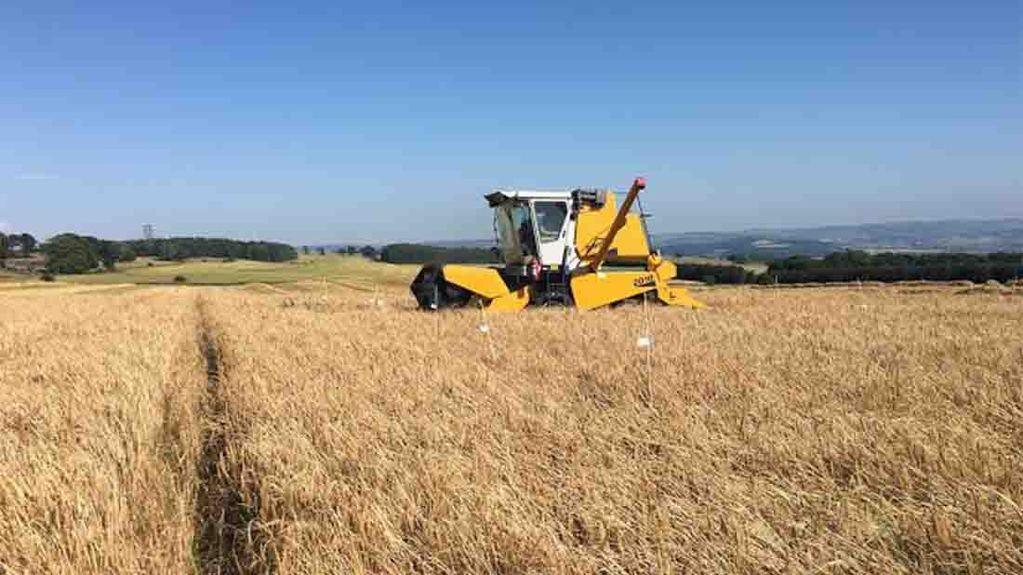 Plot trial combine gets busy at Overbury Farms, Gloucestershire - Jake Freestone