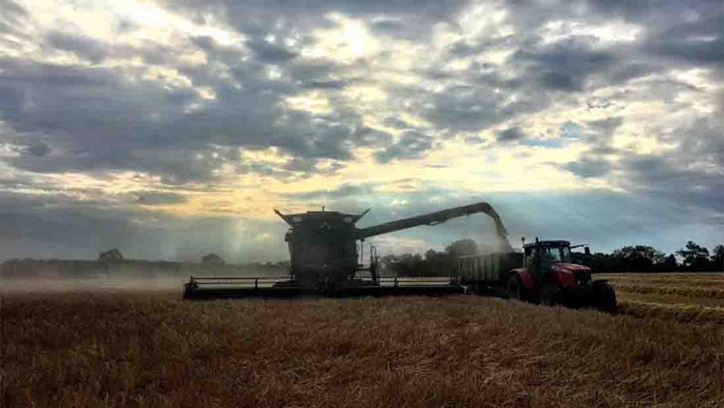 Barley harvest has begun at Overbury Farms, Gloucestershire - Jake Freestone