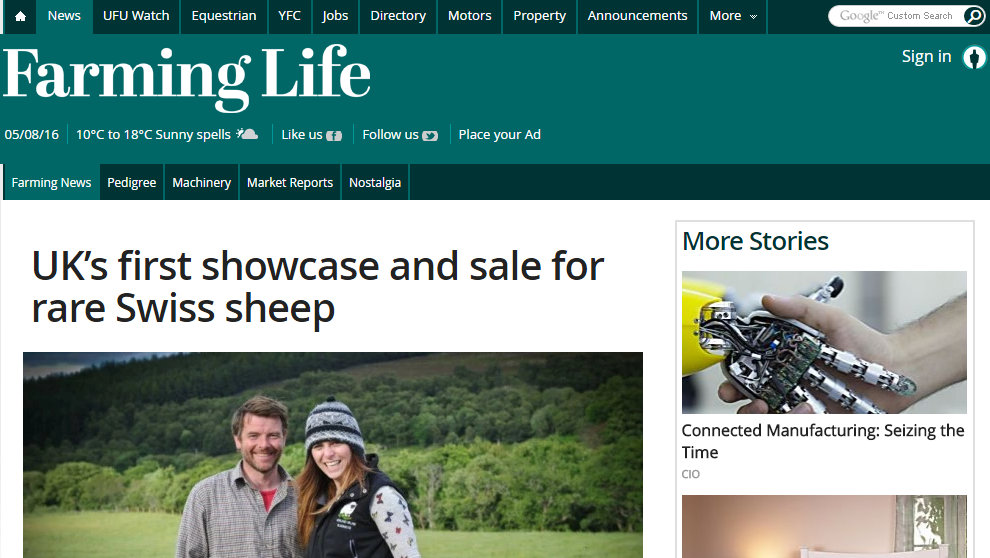 UK's first showcase and sale for rare Swiss sheep