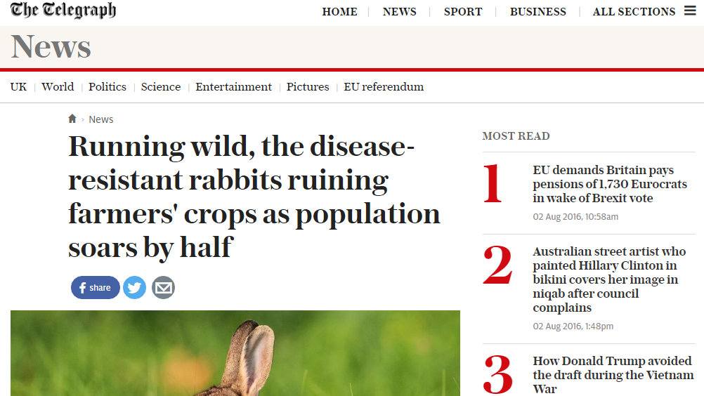 Running wild, the disease-resistant rabbits ruining farmers' crops as population soars by half